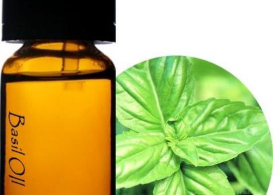 Эфирное масло базилика применение, эфирное масло базилика